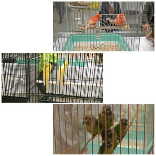 cats3_20120401182524.jpg