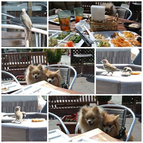 cats6_20120320155517.jpg