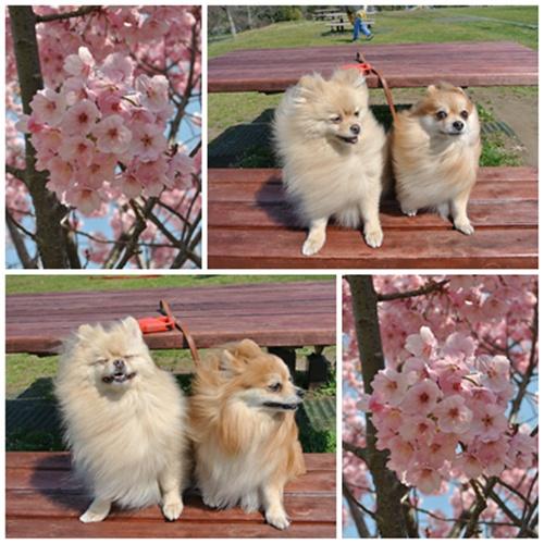 cats8_20120409205916.jpg