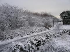 朝から・・・だるい雪。