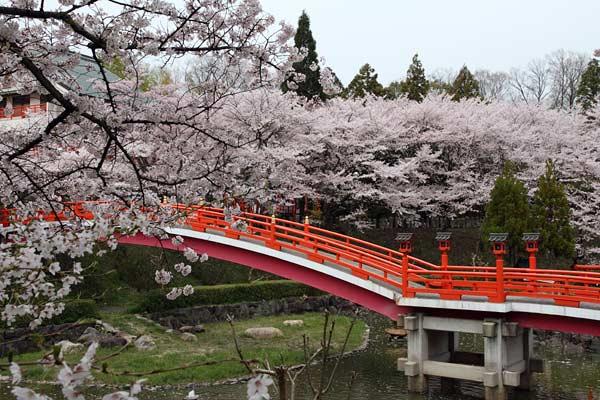 御嶽山 桜1