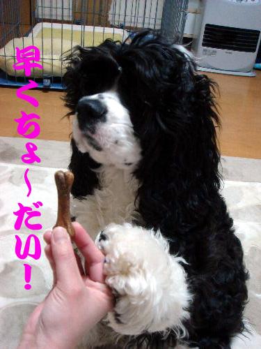 フードサプリメント試食④テ
