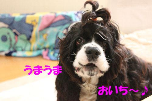 ささみジャーキー④+