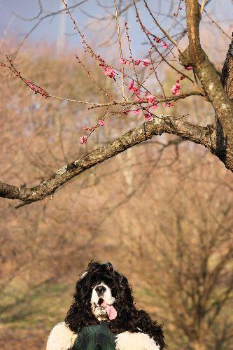 春の訪れ②