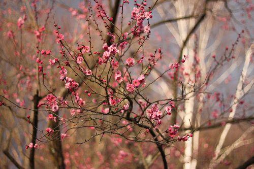 春の訪れ④