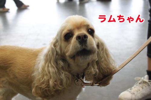 オフ会ラムちゃん2