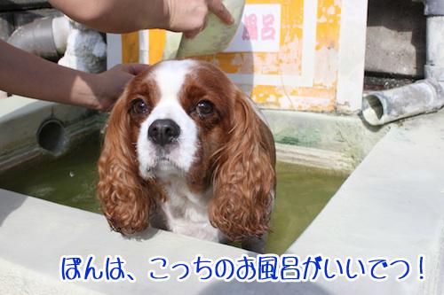 温泉13の2
