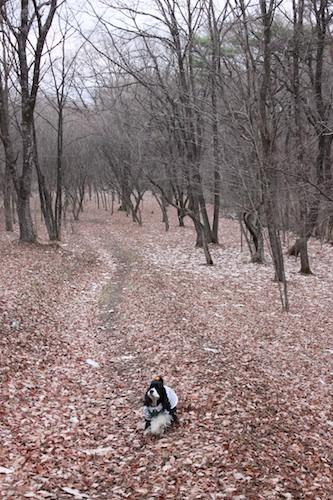 森林公園12