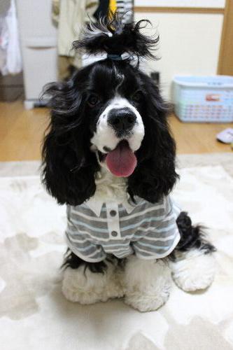 DOG-DEPT2.jpg