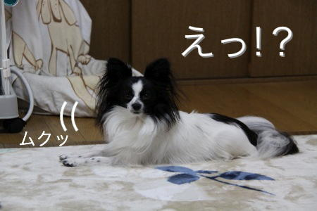 IMG_6352.jpg