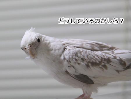 IMG_7146p1.jpg