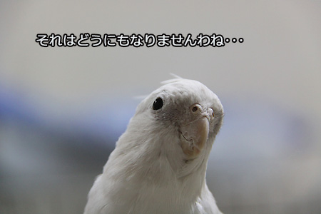 IMG_7151p1.jpg
