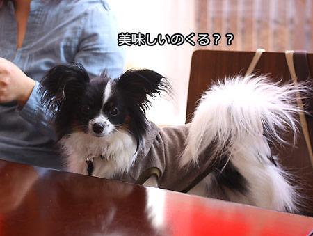 IMG_7979p.jpg