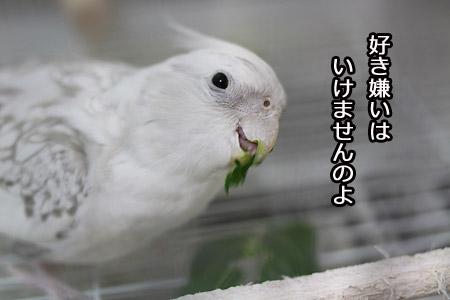 IMG_8246p.jpg