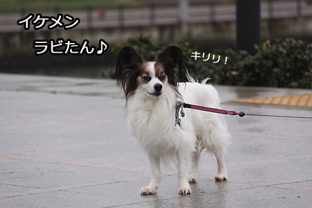 IMG_8280P.jpg