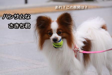 IMG_8282P.jpg