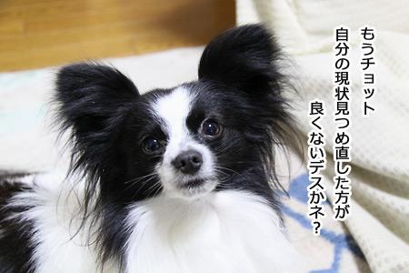 IMG_8642p.jpg