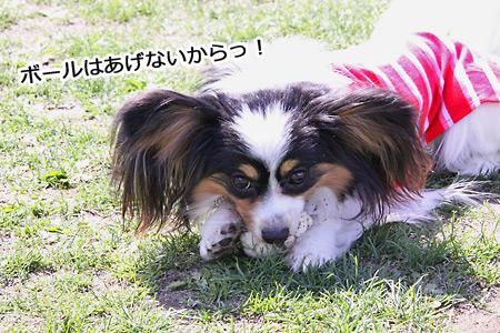 IMG_8877p.jpg