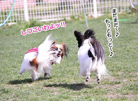 IMG_8909p.jpg