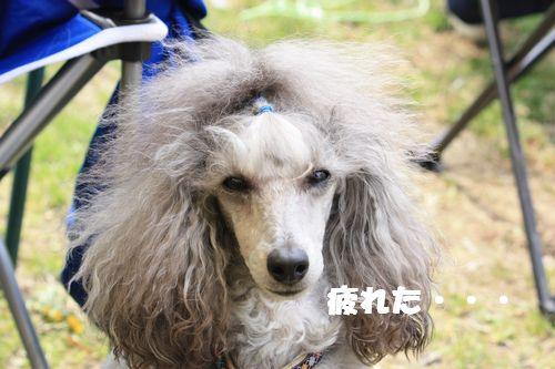 2011 04 16_味コンとチャリティ練習会_1539