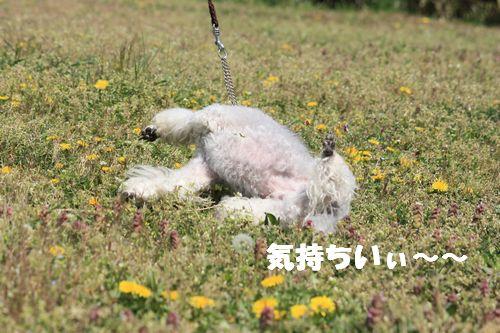 2011 04 17_味コンとチャリティ練習会_1504