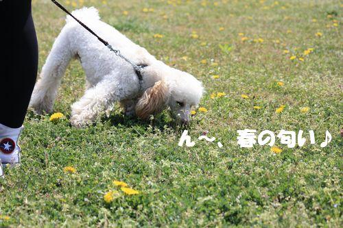 2011 04 17_味コンとチャリティ練習会_1491