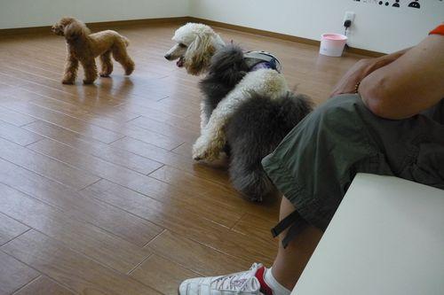 2011 07 28_PLUSTICとShanpoo+_1678