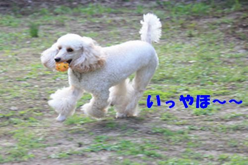 2011 09 24_カンパーニャ伊勢_2059