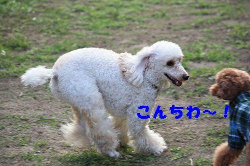 2011 09 24_カンパーニャ伊勢_2047