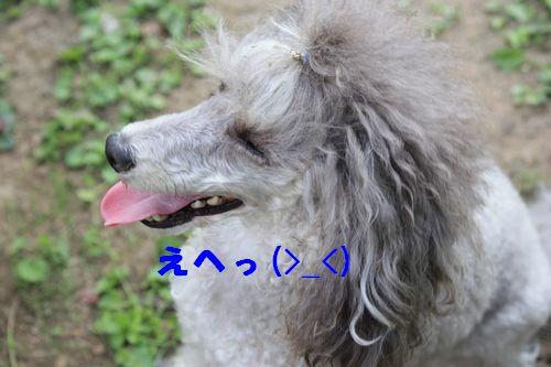 2011 09 24_カンパーニャ伊勢_2083