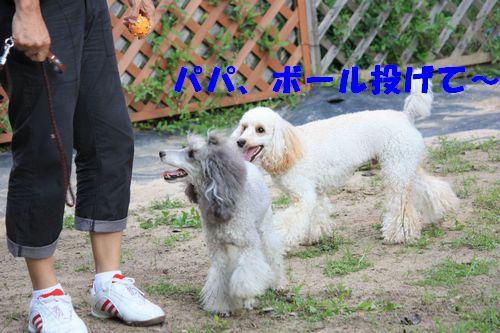 2011 09 24_カンパーニャ伊勢_2086