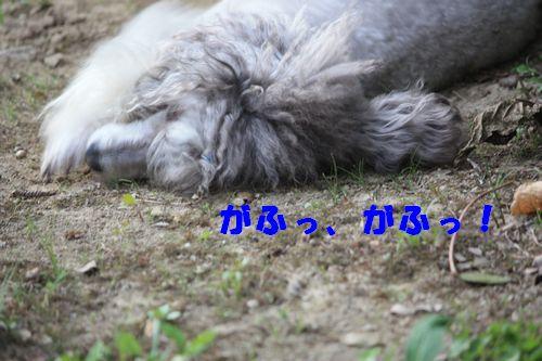 2011 09 24_カンパーニャ伊勢_2081
