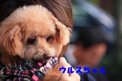 2011 09 24_カンパーニャ伊勢_2095