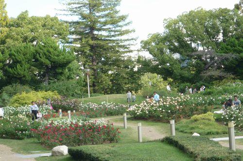 2011 10 23_靱公園バラ園とカフェ壽_2145
