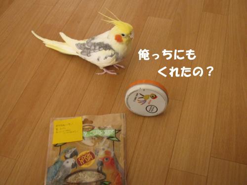 IMG_7326_convert_20130308144210のコピー