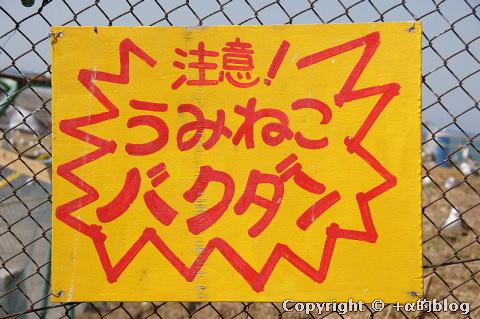 umineko1104m_eip.jpg