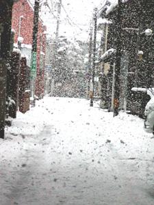 2010yuki.jpg