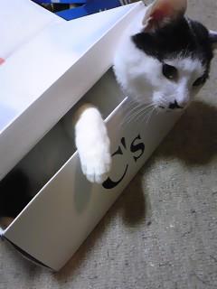 箱入りここちゃん