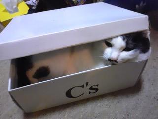 箱入りここちゃん2