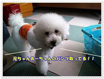 DVC00033_20100610125627.jpg