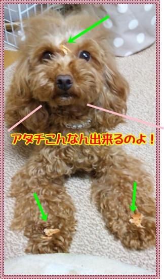 DVC00057_20100417213639.jpg