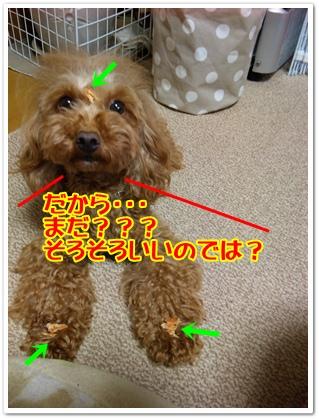 DVC00059_20100417213657.jpg