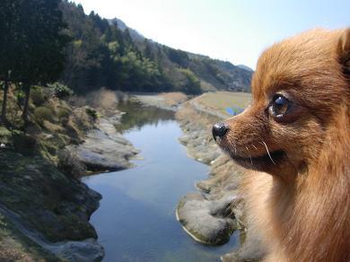 川とりおん