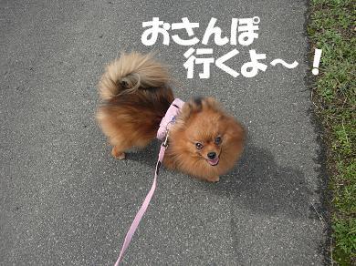 おさんぽ行くよ~!