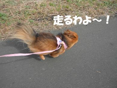 走るわよ~!