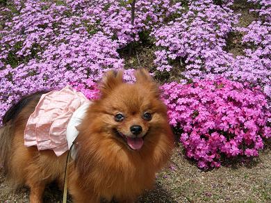 花とりおん