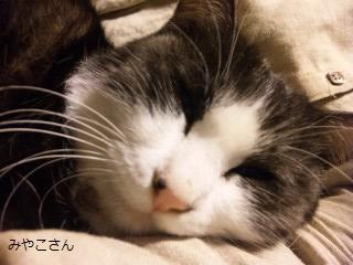 みやこsan2