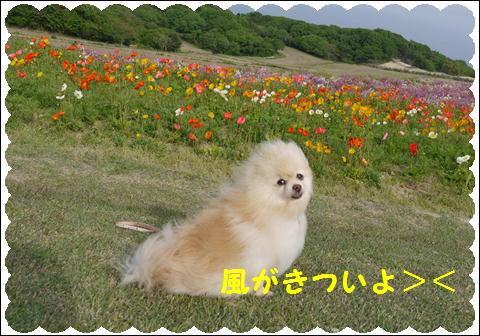 花さじき5月①