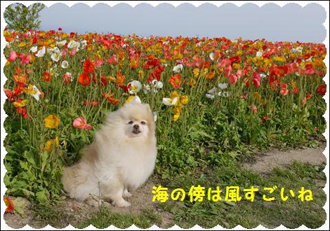 花さじき5月②