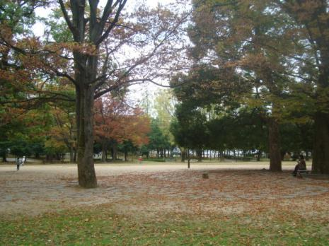 秋の中央公園